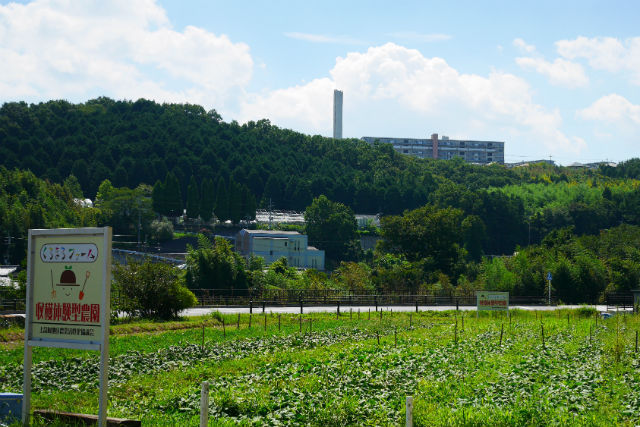 【大阪・河内長野市】落花生・収穫体験(4株持ち帰り・30分)