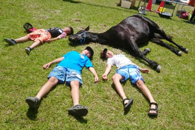 【岡山・和気郡】馬と仲良くなるスクール・体験乗馬付き(70分)