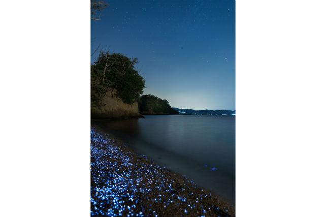 【岡山・エコツアー】手軽さも魅力!近くて遠い存在・海ほたるを観察しよう