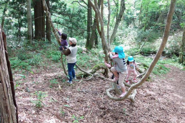 【岡山・ガイドツアー】森のゆりかごで癒しを実感!毛無山麓ゆったり2時間散策コース