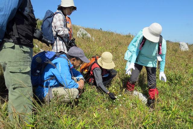 【山口・美祢市】秋吉台の自然・草花を楽しむエコツアー