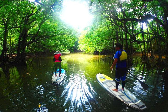 【沖縄・西表島・SUP】手軽に楽しむ水上散歩!SUPマングローブクルージング(写真撮影付)