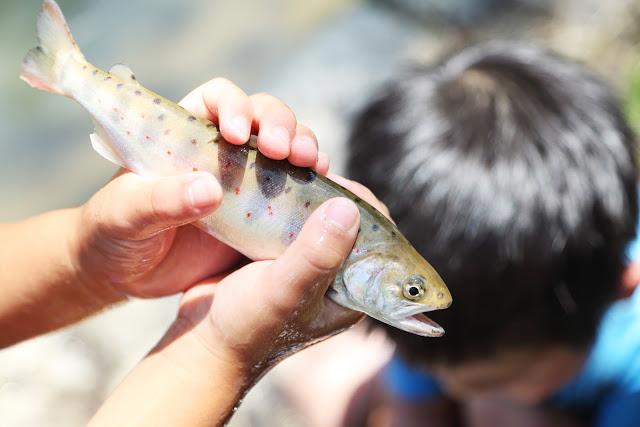 【岡山・真庭市・魚つかみどり】とれたての味を楽しもう!魚つかみどり体験
