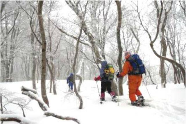 【北海道・スノーシュー】白銀のブナ林をおさんぽ。歌才ブナ林ツアー