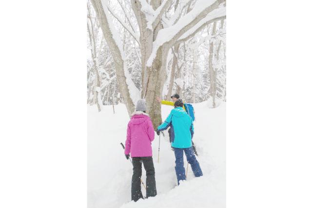 【北海道・スノーシュー】秘境駅・「小幌駅」を目指そう!冬の探検ツアー(経験者向け)