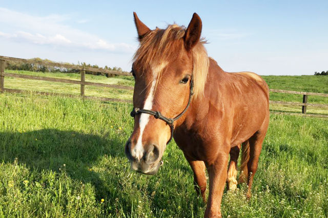 【栃木・那須・乗馬体験】草原をお散歩しよう!プロムナードコース(約30分)