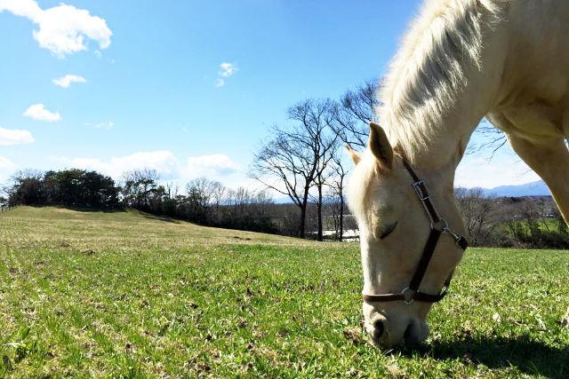【栃木・那須・乗馬体験】たっぷり4.5kmのお散歩。プレーリーコース(約75分)