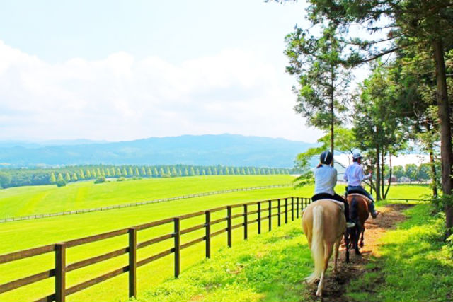 【栃木・那須・乗馬体験】馬と草原をかけ抜けよう!ハーベストコース(経験者向け・約60分)