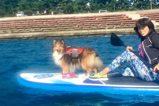 【静岡市・SUP】愛犬と一緒に出かけよう!ドッグSUP(カフェランチ付き)