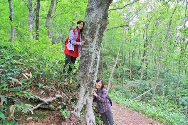 【広島・森林セラピー】展望の良さが自慢!深入山・セラピーロード