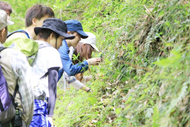 【広島・森林セラピー】渓谷美を楽しむ。三段峡黒淵・セラピーロード