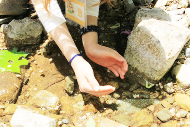 【広島・森林セラピー】登山感覚で歩こう。恐羅漢・セラピーロード