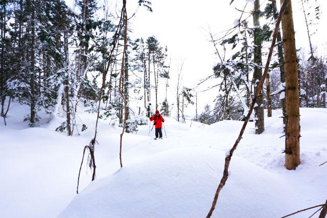 【北海道・ニセコ・スノーシュー】雪化粧した森を歩こう!スノーハイクツアー・ソロプラン(1名・貸切・写真撮影付)