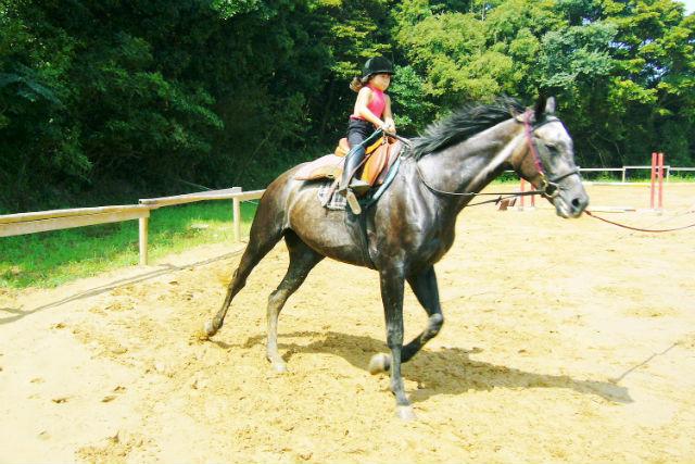 【福岡・乗馬体験】乗馬を趣味にしよう!乗馬体験・12回チケット