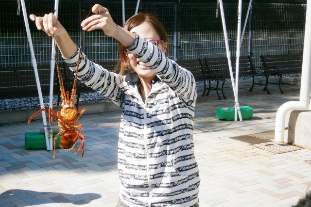 【三重・志摩市・釣り体験】高級食材をゲット!伊勢えび釣り体験