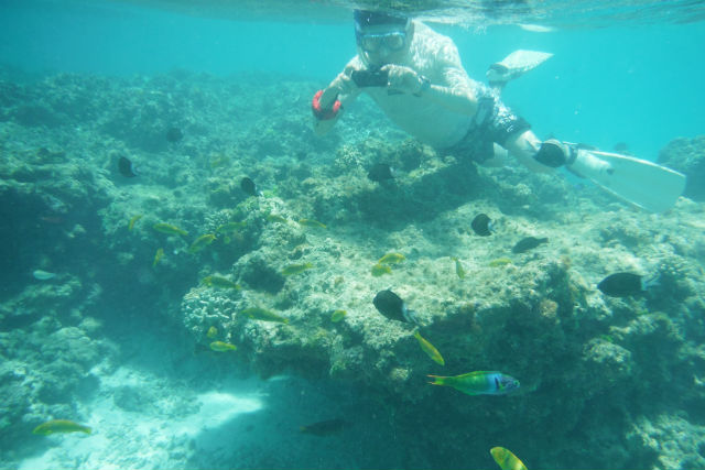 【鹿児島・与論島・シュノーケリング】与論島のキレイな海で泳ごう!シュノーケリングプラン