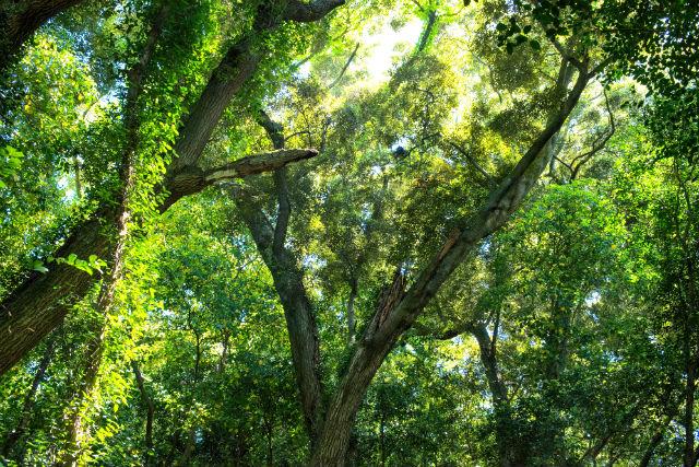 【兵庫・家島・ガイドツアー】原生林と海に囲まれた「家島神社」を目指す宮コース