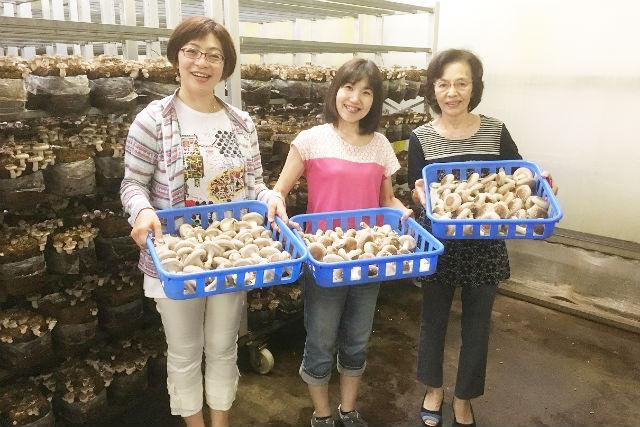 【徳島・鳴門・しいたけ狩り】採れたて肉厚!菌床しいたけ収穫・試食体験