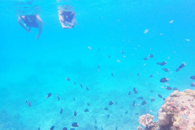 【沖縄・渡嘉敷・SUP】透明度抜群のケラマブルー!SUP+シュノーケル