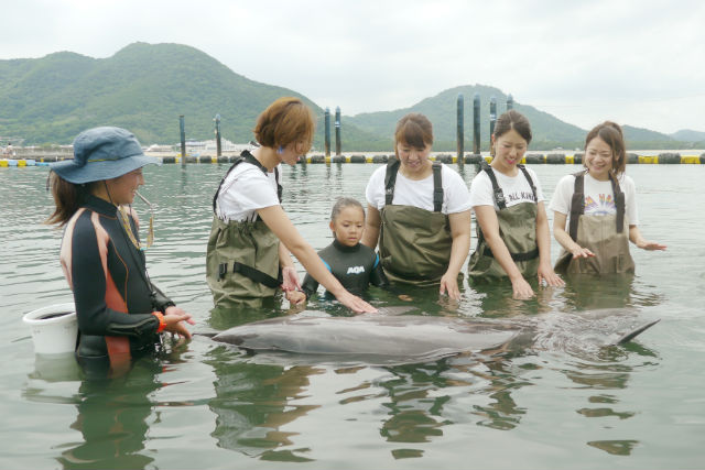 【香川・イルカツアー】入場料込み!イルカと遊べるふれあいビーチ体験