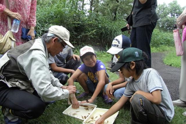【新潟県十日町・エコツアー】先生はあてまの森!ポポラ自然ウォークで自然観察しよう