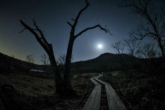 【栃木・ナイトツアー】地元ガイドと夜の森を散策できる!ナイトハイカーコース