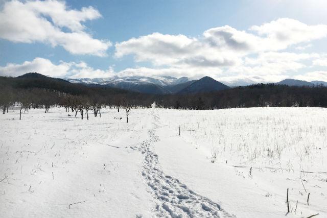 【北海道・知床・スノーシュー】雪の森で星空観賞!自家製ホットワイン付き