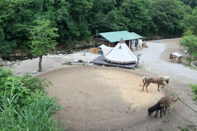 【宮城・仙台・乗馬体験】プライベートレッスン乗馬体験とテント泊を楽しもう!