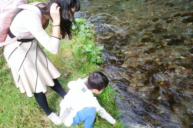 【北海道・登別・エコツアー】力強くダイナミックな姿!川を上るサケの大群を見よう
