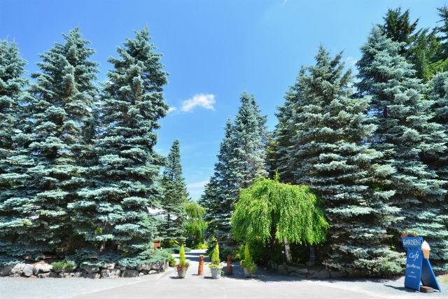 【北海道・帯広・ガイドツアー】緑に囲まれた庭園を巡る!真鍋庭園ガイドツアー