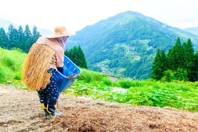 【徳島・三好・ハイキング】日本一の清流と傾斜42度の畑を散策