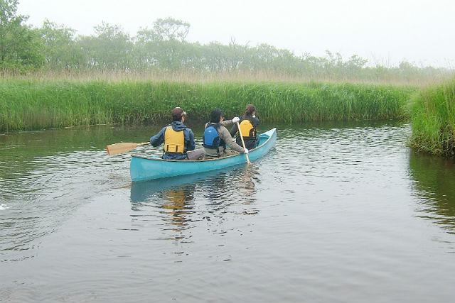 【北海道・カヌー】貴重な野鳥や動物に会えることも!霧多布湿原カヌーツアー