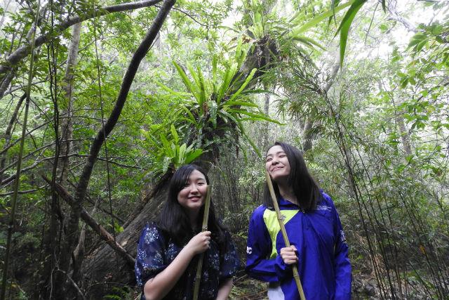 【鹿児島・奄美大島・ガイドツアー】亜熱帯の森&滝で遊ぶツアー