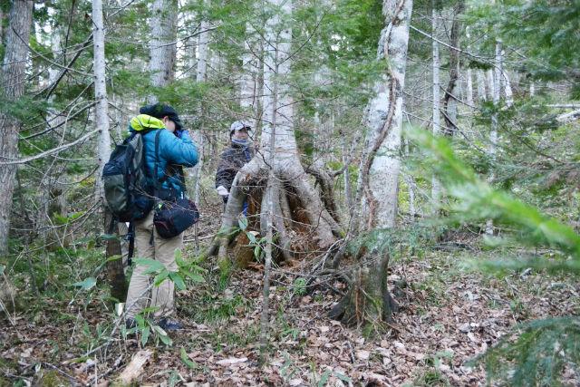 【北海道・阿寒湖・トレッキング】特別感満載!不思議の森(光の森)歩き2時間30分