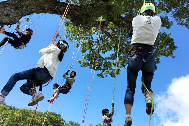 【兵庫・木登り】大人も子供も夢中になれる!ツリーイング(木登り)を体験★ドリンクプレゼント