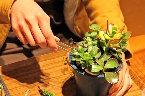 【寄せ植え体験】お部屋に緑とうるおいを。多肉植物の寄せ植え体験