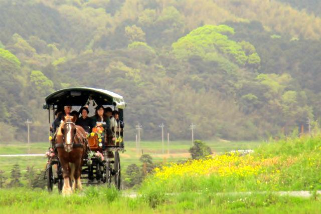 【福岡県福津・観光馬車・土日】世界遺産に登録された場所をめぐろう!わくわく古墳めぐりコース