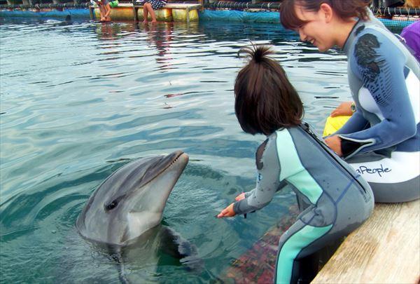 【静岡・伊東】エサをあげて優しくタッチ!イルカと触れ合いプラン
