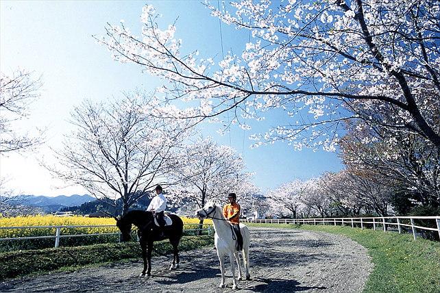 【宮崎・乗馬30分】馬の背に揺られて季節の風を感じよう!乗馬体験初心者プラン