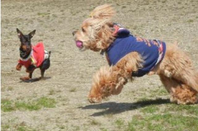 長岡の自然の中で遊ぼう!人と犬のことを考えたドッグラン