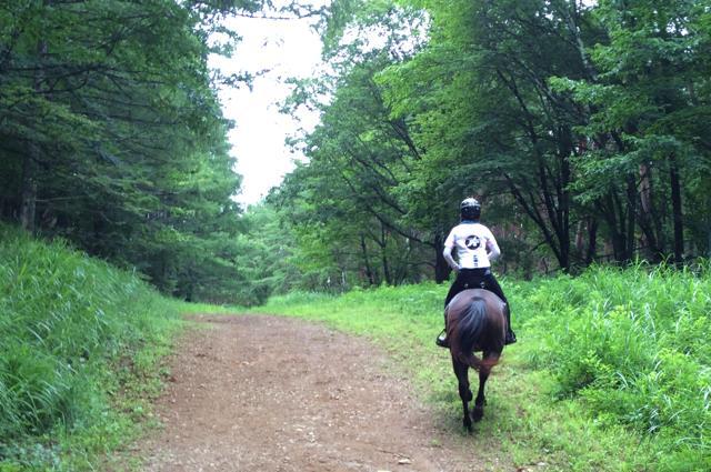 【八ヶ岳・乗馬体験】歴史を感じる「武田信玄」ゆかりの道。馬と歩こう、外乗90分
