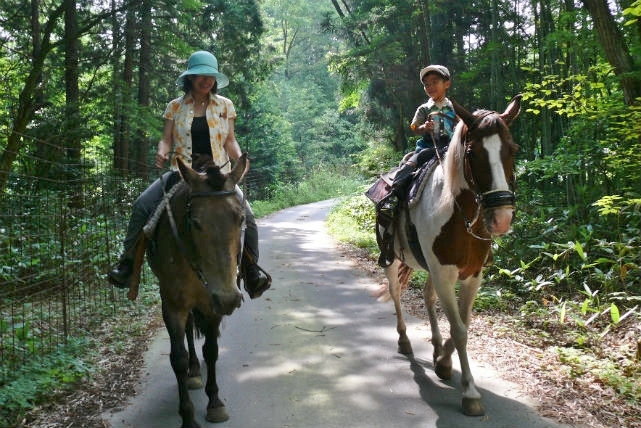【広島・安芸・30分・乗馬体験】森の中を馬と散歩しよう。外の散歩30分乗馬プラン