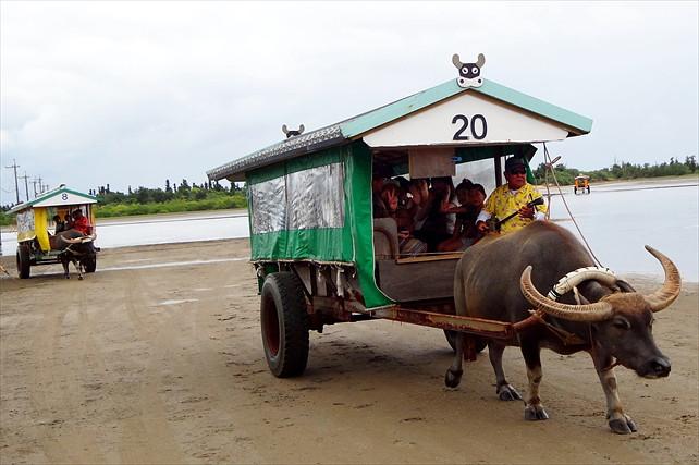 【西表島・カヌー】カヌーもジャングルも由布島水牛観光も楽しめる!カヌー&トレッキング+水牛車観光コース