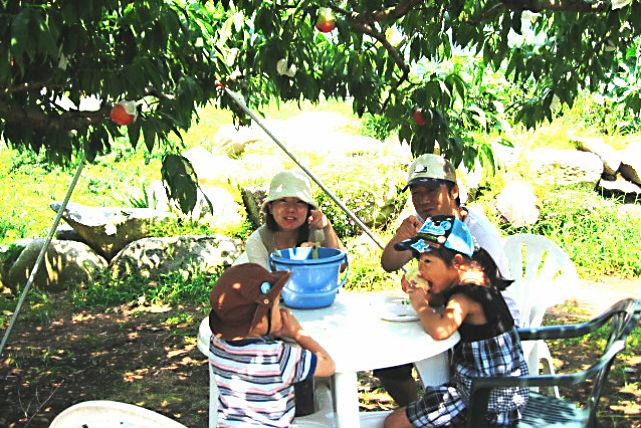 【山梨県御坂町・桃狩り】お口いっぱいにがぶり!家族で楽しむ完熟桃の食べ放題プラン