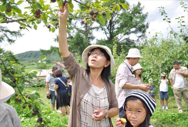 【函館・農業体験】北海道の自然のめぐみ!採れたてのおいしさを味わう収穫体験