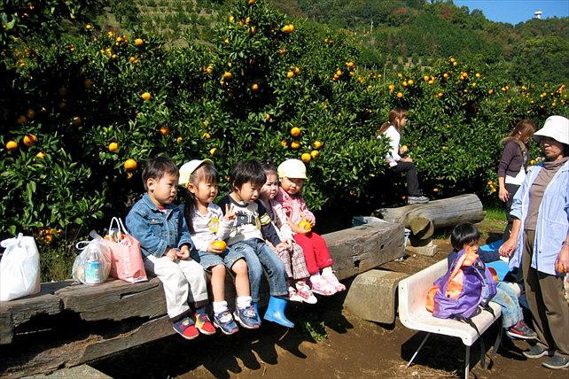 【東名厚木ICから20分】時間無制限のみかん狩り。専門農園で果汁たっぷりのみかんを食べ放題で満喫!