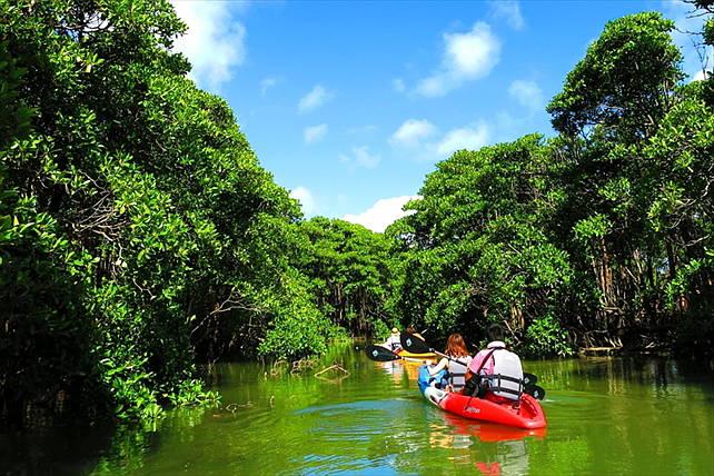 【沖縄・東海岸・マングローブカヤック】探検家気分で億首川のマングローブ林を進もう!◆ツアー中の写真付き