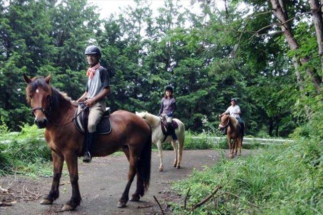 【数量限定割引・茨城・乗馬】森林浴を楽しみながら、のんびり乗馬しよう!70分・外乗