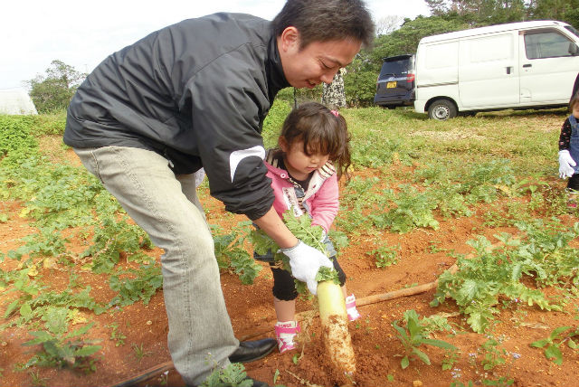 【沖縄・今帰仁・農業体験】ふわふわの土に触れながら、野菜の植え付け・収穫などを楽しむ農業体験