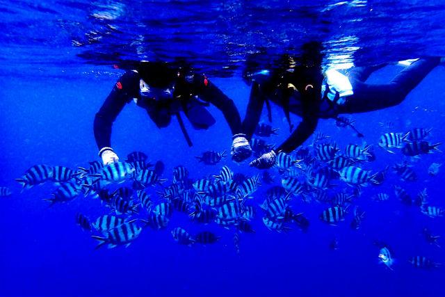 【沖縄県・ボートシュノーケリング】「青の洞窟」の感動をすべての方に!送迎付きプラン